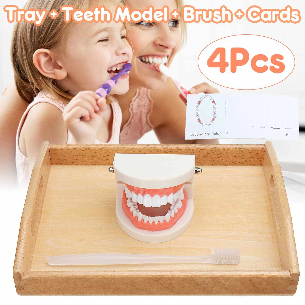 Teeth Model Early Educational For Kids Teeth Brushing Montessori Practical Life Simulated Tooth Toy Standard Demonstration Model