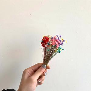 Image 5 - 90 יח\חבילה טבעי ברזילאי מיני דייזי יבש אגרטל זכוכית בקבוק דקורטיבי מילוי חומר בית חתונת קישוט אבזרים