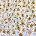 Натуральные сухие прессованные цветы 100 шт., белый прессованный цветок маргаритки для смолы, ювелирные изделия, наклейки для ногтей, макияж, ...