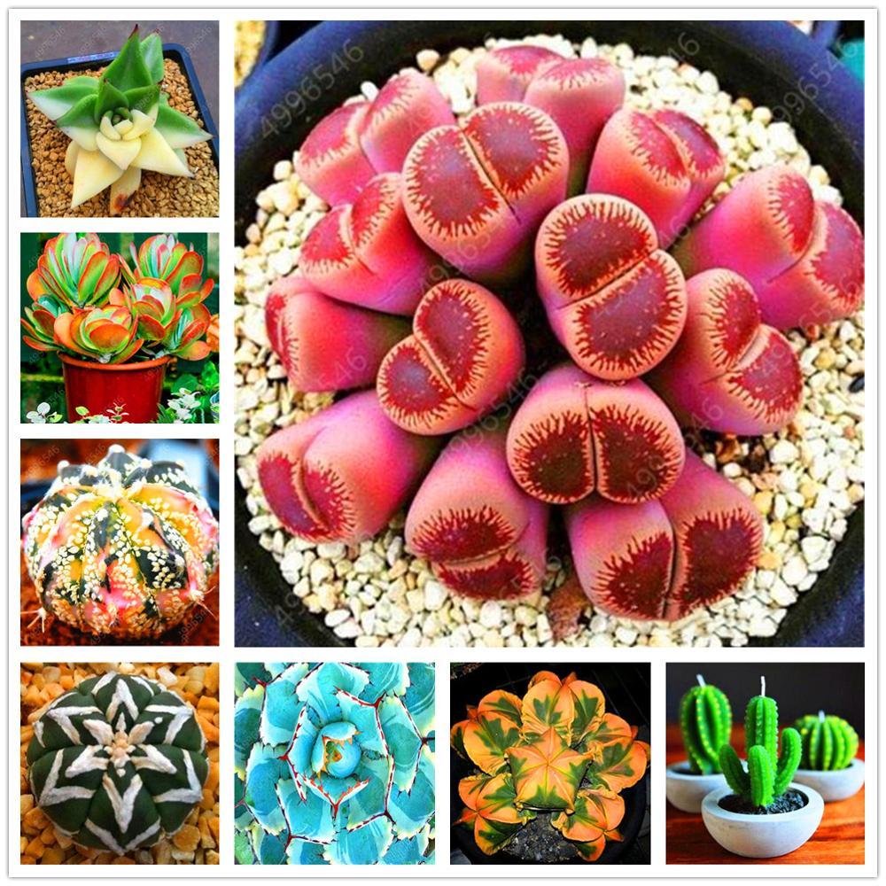 Plant Flower Bath Salts Mini Juicy Cactus Essence 200Pcs XZZ-264