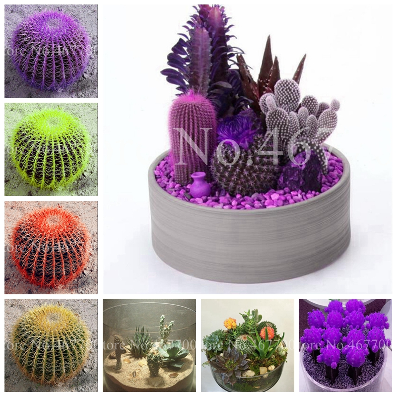 120 Pcs Exotic Cactus Bonsai Mix Organic Ornamental Succulents Plants Purify The Air & Prevent Radiation DIY Home & Garden Decor
