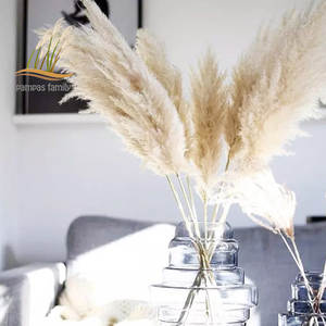 Plants Natural Grass-Decor Dried-Flowers Pampas Wedding-Special White Large-Size Fluffy