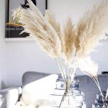 85-120cm pampas grama extra grande natural branco flores secas buquê fofo para boho estilo vintage casa flores de casamento decoração