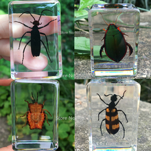 1piece Insect Specimen Stink Bug Larva In Clear Resin Educational Explore Instrument School Teaching Supplies 44x29x18MM