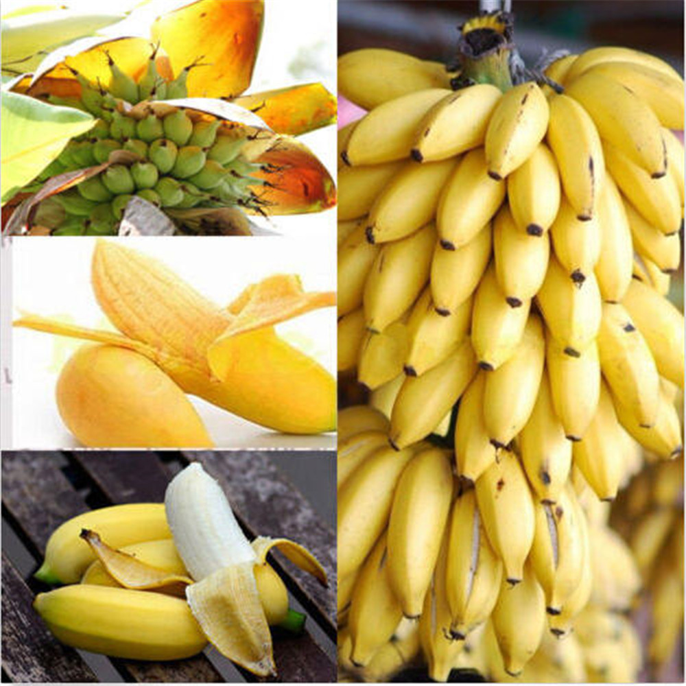 Banana Plant Fruits Bath Salts 100Pcs Imperial Banana Essence AN-ZZ08-100