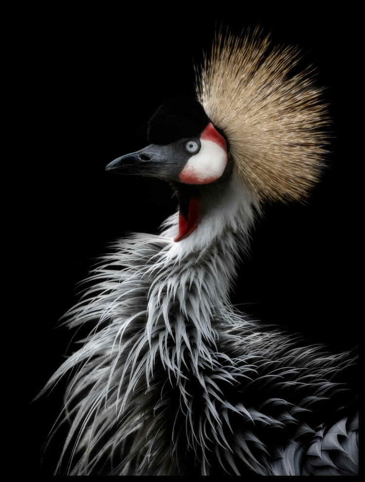 Six-picture Combination Abstract Art Cactus Crowned Crane's Portrait Oil Canvas Paintings Poster Picture for Kitchen  Wall Decor