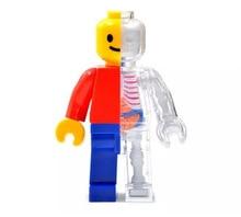 4d الإنسان منظور شفاف هيكل عظمي تشريحي نموذج العظام لغز تجميعها لعبة طبية