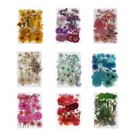 Flores secas múltiples, Larkspur rosa, Mini rosa, Hortensia, Margarita, Real prensado