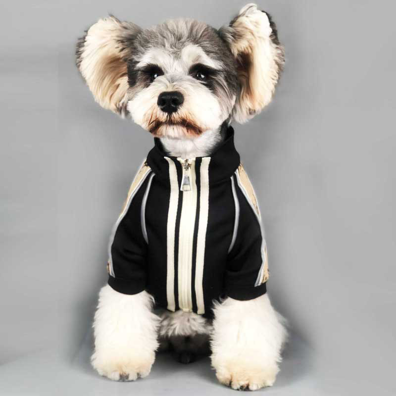 bulldog francês filhote de cachorro jaqueta roupa