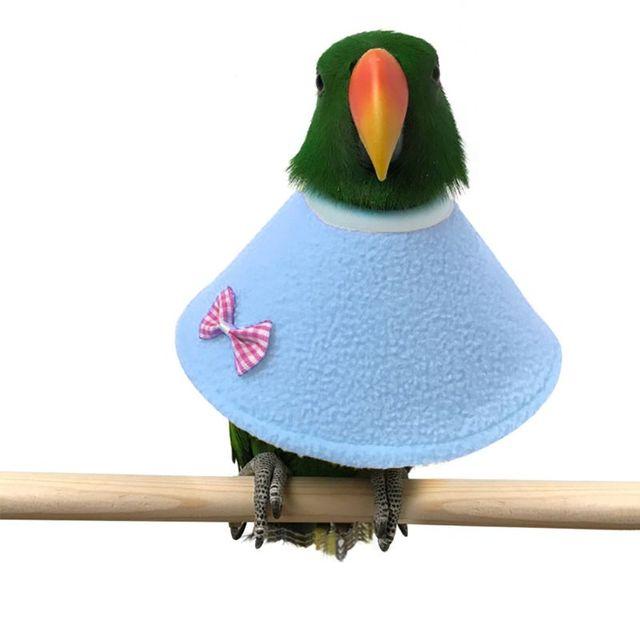 Elizabethan Parrot Collar  2