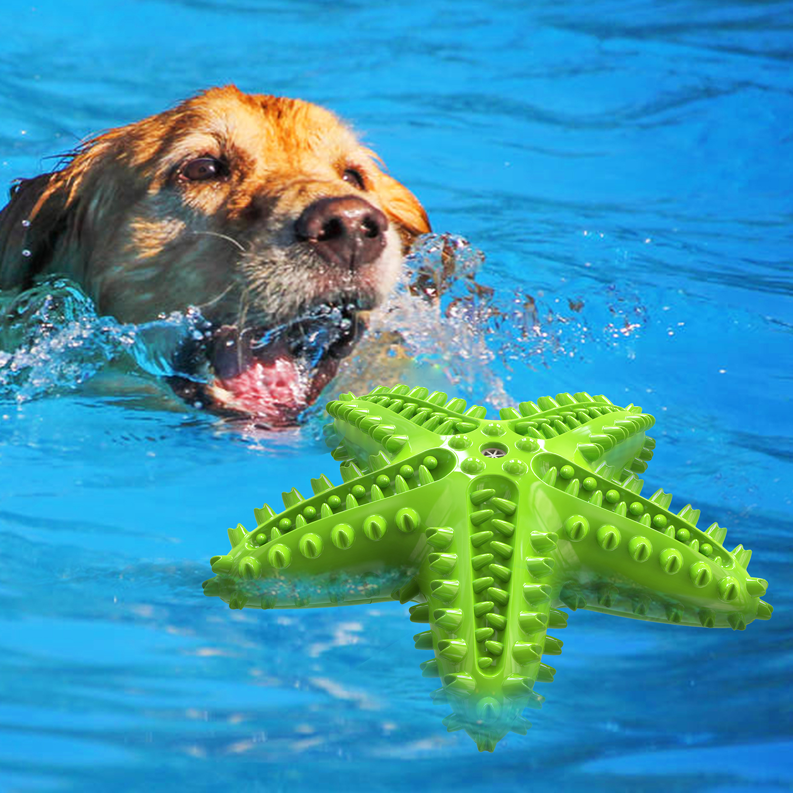 Starfish Shape Dog Squeaky Toy Dog Teether Dog Toothbrush Water Floating Toys For Dog Molar Dog Supplier img2