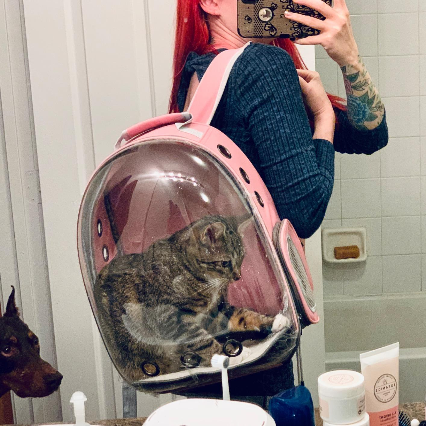 Cat Carrier Bag Cat Cage Transport Backpack Bag Travel Pet Portable Breathable Dog Backpack Transparent Bags Carrier Pet For Cat