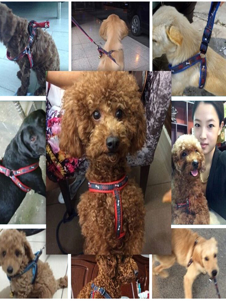 Dog Hand Holding Rope Rope Suspender Strap Dog Teddy Case Neck Mao Sheng Chest For Unscalable Universal Dogs Bichon Item