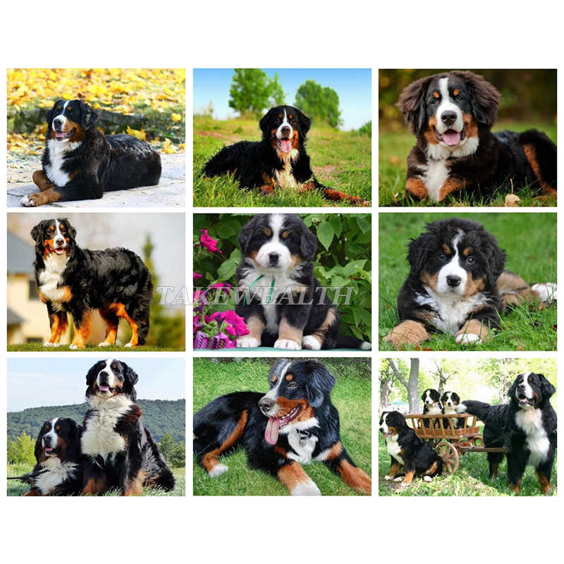 5D DIY Diamond Lukisan Bernese Mountain Anjing Berlian Bordir Cross Stitch Hewan Mosaic Dekorasi TT829