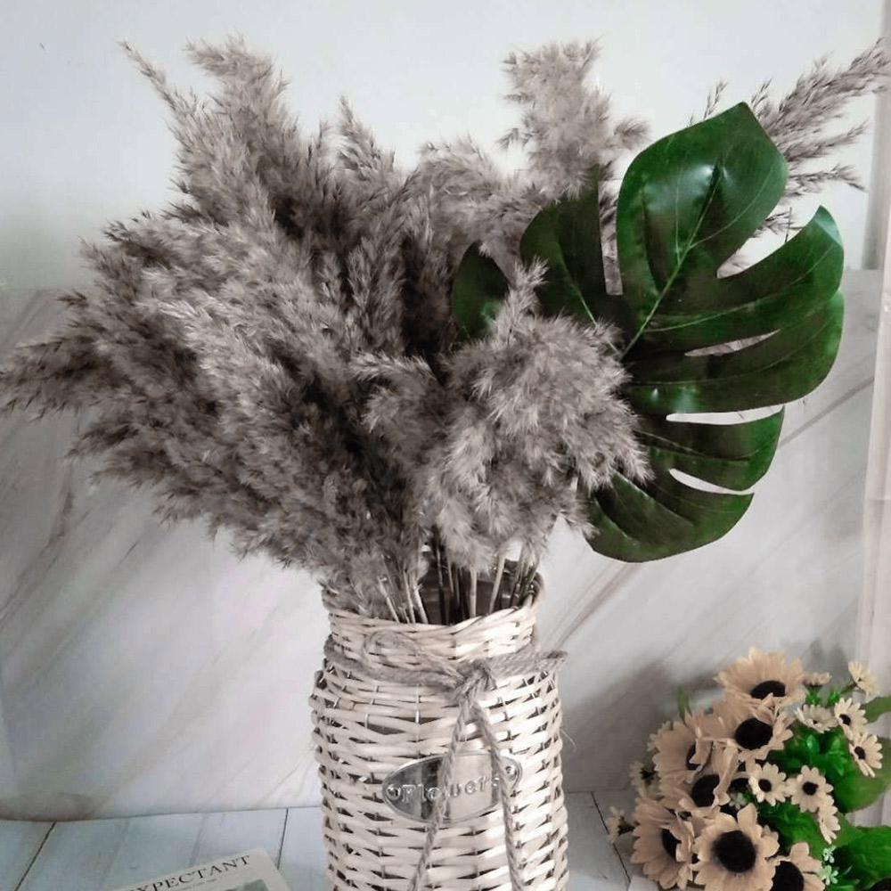 1 pçs flor seca natural pampas grama reed decoração para casa cinza grande layout de casamento canto loja exibição janela decoração