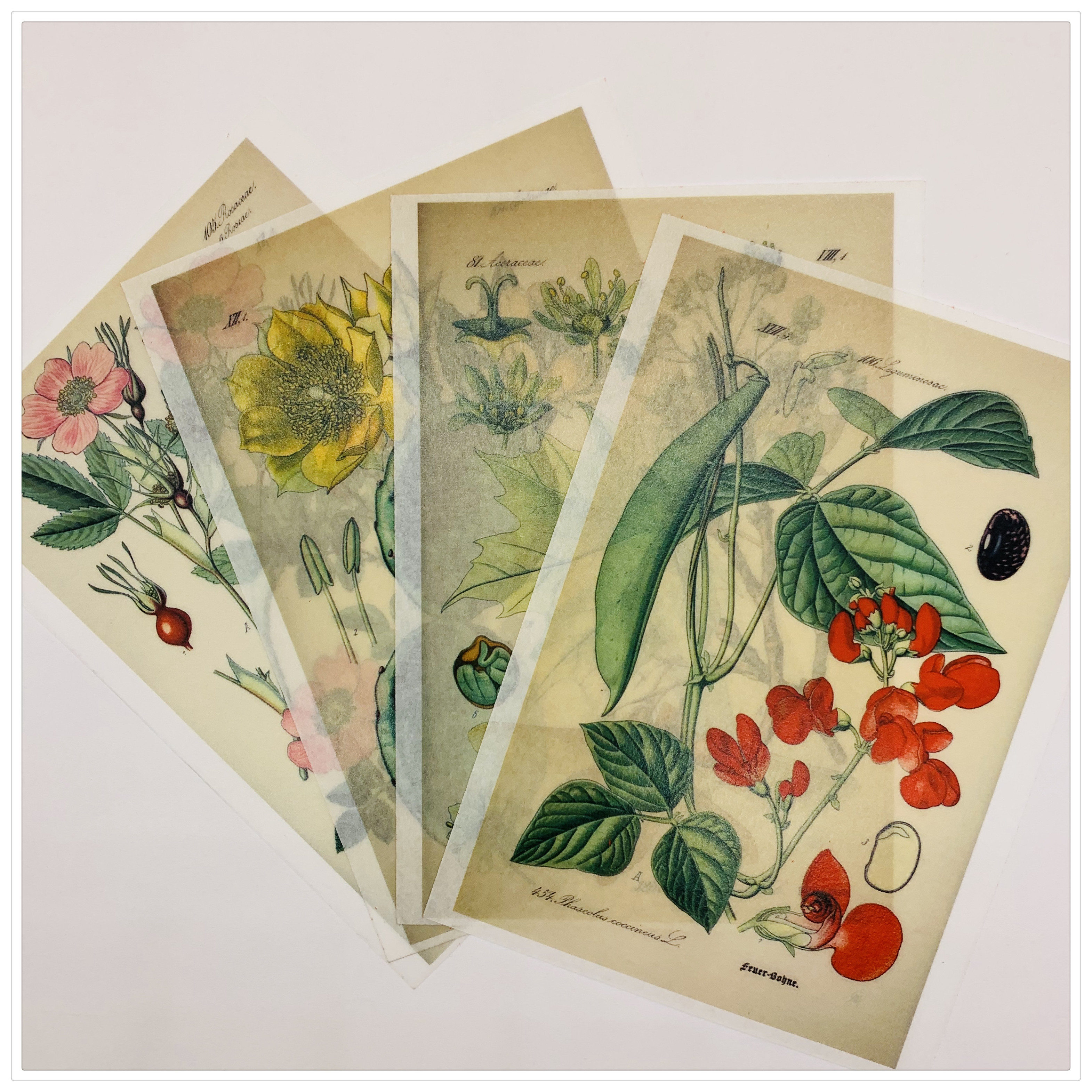 12PCS Vintage Botany Priming Stickers DIY Scrapbooking Album Junk Journal A6 Diary Happy Planner Decoration Stickers