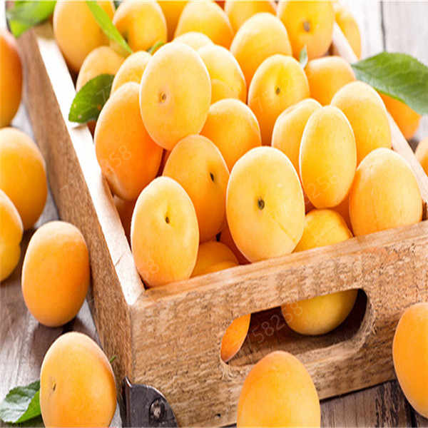 2 piezas bonsái albaricoque Planta de árbol orgánico en maceta Planta de Fruta hogar jardín Fruta Perfume comestible Fruta bonsái variedades envío gratis