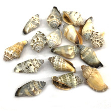 Natural shell fashion conch Pendants Charms Necklace pendant for Jewelry Making DIY Bracelet Necklaces Accessories Size 15x30mm