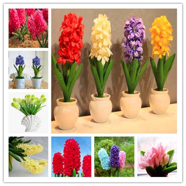 200 Pcs Bonsai Hyacinth, Perennial Hyacinth Potted Plant, Indoor Plant Easy Grow In Pots, Bonsai Plant Flower For Home Garden
