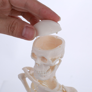 Image 5 - 45 センチメートル人間の解剖学的解剖骨格モデル卸売小売ポスター学ぶ援助解剖人間の骨格モデル