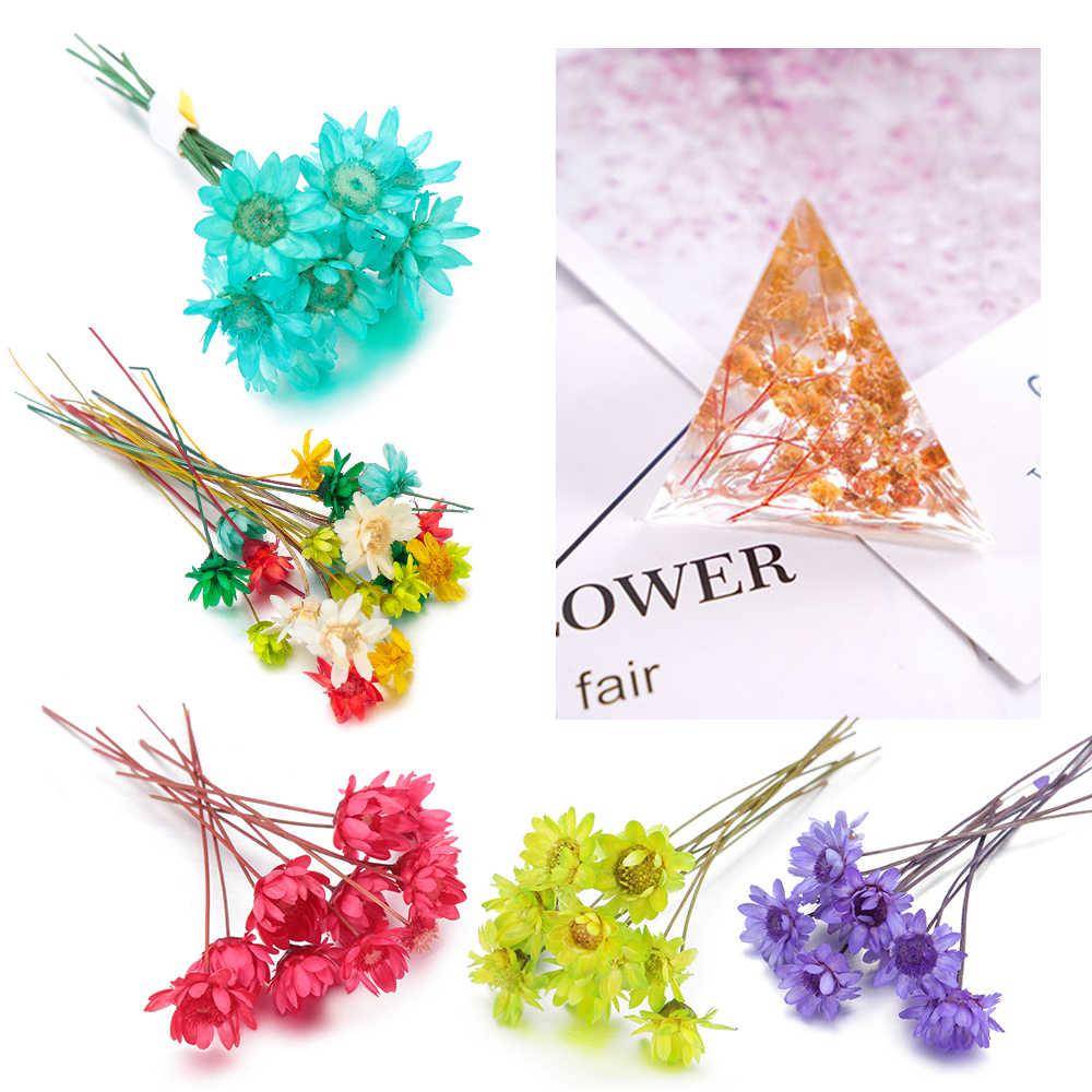 10 piezas brasilero estrella seca flor DIY resina epoxi artesanías hechas a mano relleno materiales flores secas tiempo piedra fabricación de joyas