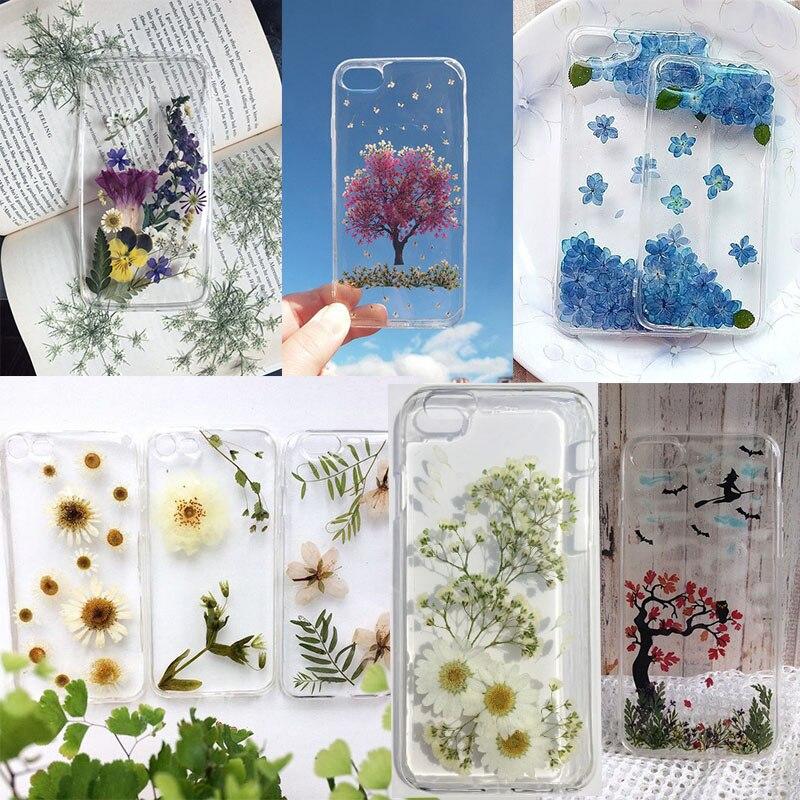 Купить с кэшбэком Pressed Flower Mixed Organic Natural Dried Flowers DIY Art Floral Decors Collection Gift Best Price