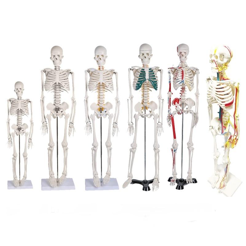 45CM 85cm Human Skeleton Model Anatomical Anatomy Human Flexible Medical Anatomical Boneco Toy In Medical Science Supplies