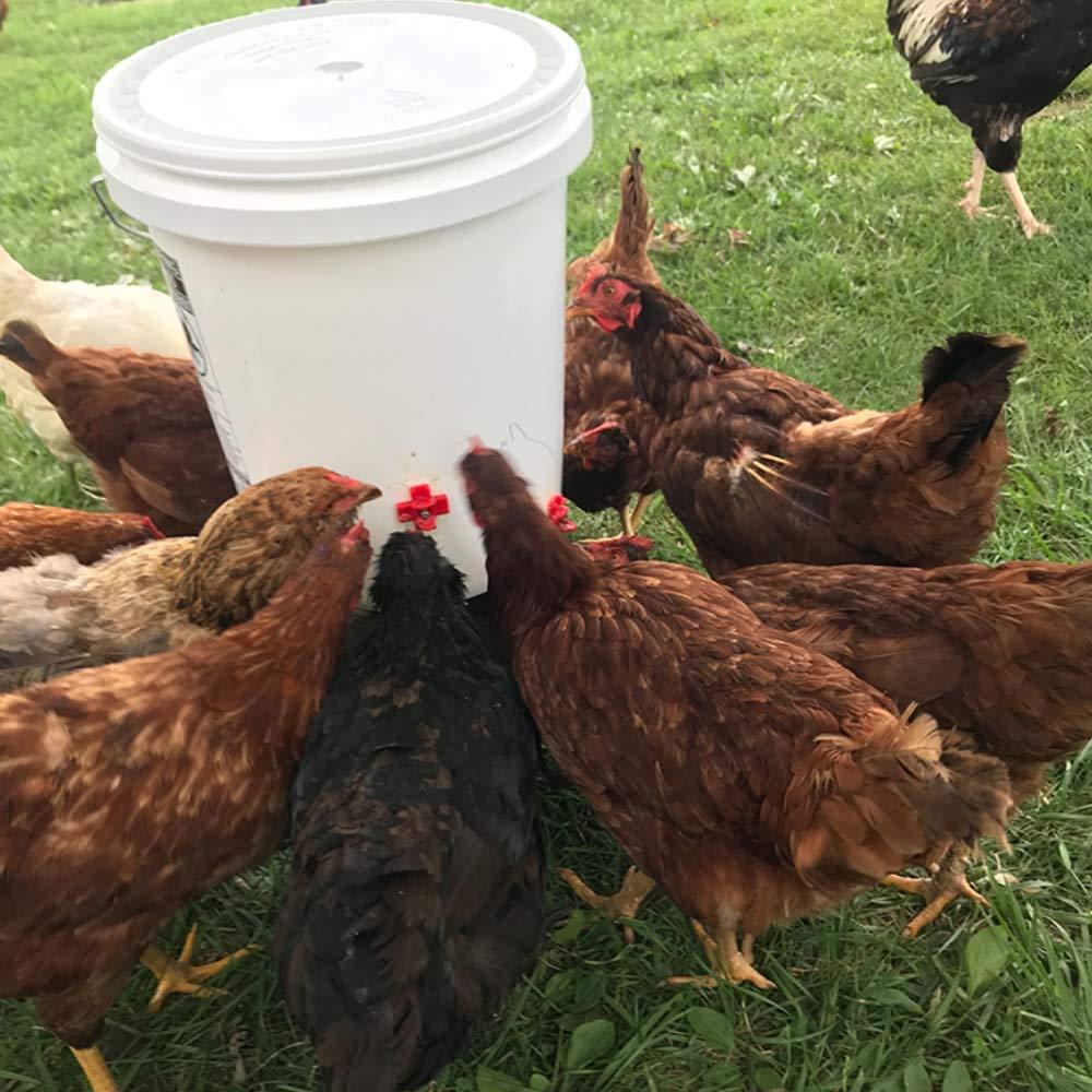 Bebedor para aves de frango, suporte lateral horizontal, 10/20 peças, montagem lateral, automático para aves, bebedor limpo, para frango