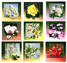 5D DIY Diamond Painting White Chrysanthemum All kinds of flowers Cross Stitch Home Decor(China)