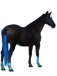 Usb-Lights Horse-Harness Equestrian Chargeable Outdoor LED 100CM Crupper New