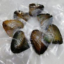 O presente real da pérola das ostras embalou individualmente o vácuo 7-8mm escudo da joia fs99