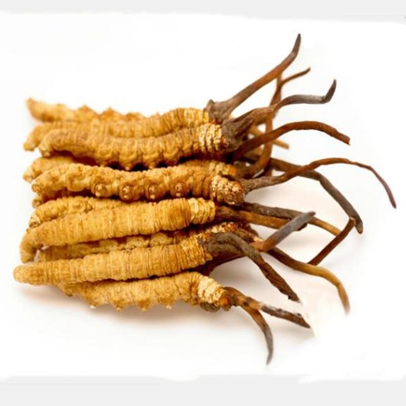 Nagto Cordyceps Authentic 10 Grams Tibet New Dried Cordyceps Gift Box