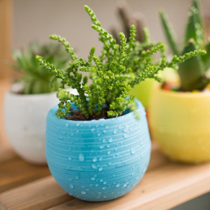 1 x Mini Round Plastic Meat Plant Flower Pot Garden Home Office Decor Micro Landscape Planter in Flower Pots Planters from Home Garden