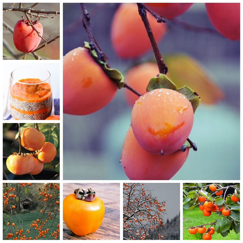 10 Pcs Persimmon Plant Succulent Plants Non-GMO Fruit Trees Full Of Nutrition Home Garden Hardy Plants For Flower Pot Planters