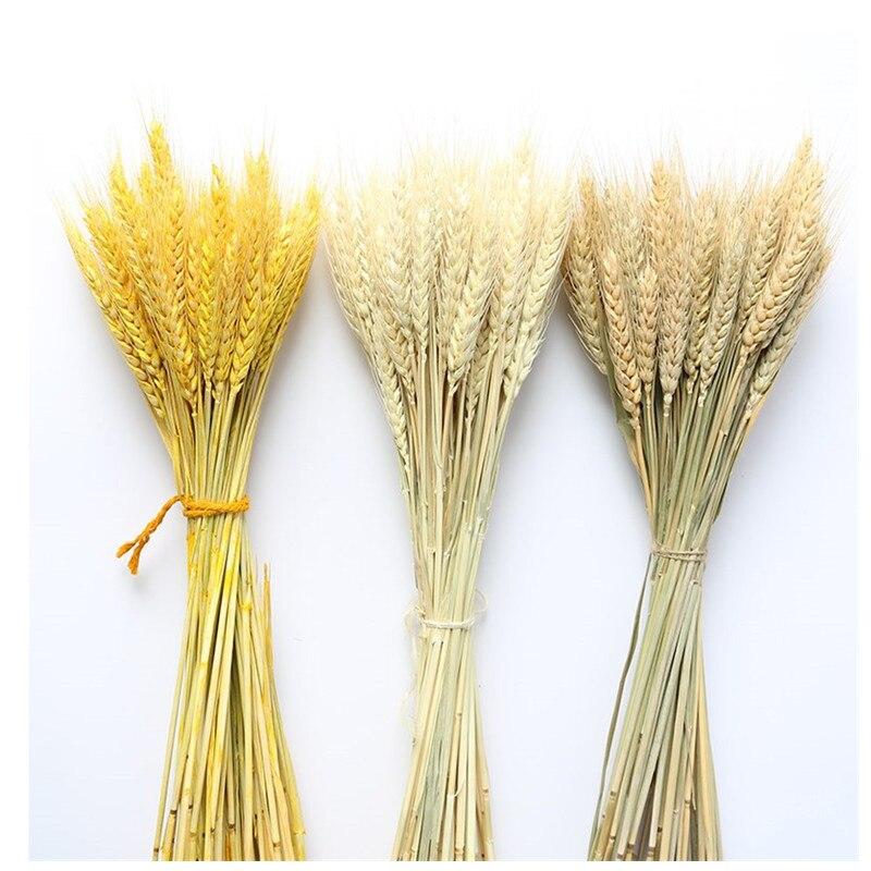 Verdadeiro trigo orelha flor decoração natural pampas coelho cauda grama flores secas para festa de casamento diy artesanato scrapbook bouquet
