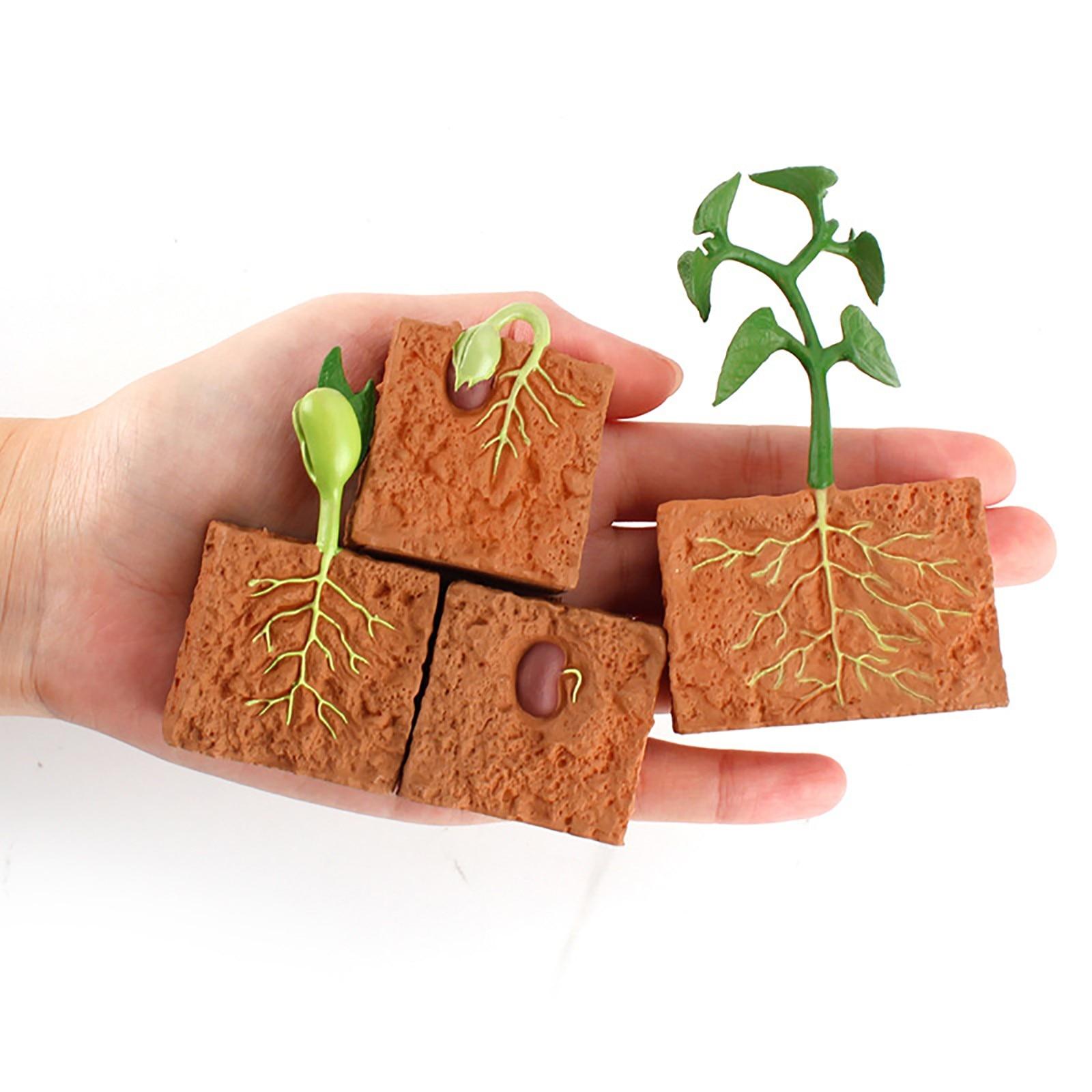 Цикл роста растений, набор моделей жизненного цикла, имитационная модель, обучающий материал, обучающая детская игрушка, мини-модели растен...