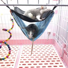 Funny Hamster Cage Hanging Home Sleeping Nest Bed Pet Rat Hamster Rabbit Guinea Pig Cage Swing Toys for Small Pet hamster hanging house hammock pineapple design small animals cotton cage sleeping nest pet bed rat hamster toys cag