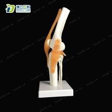 Boli/flexibel articulação do joelho humano com ligamentos modelo anatomia esquelética em trauma enfermagem manequim trem