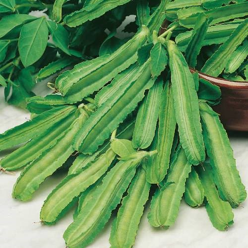 10 Rare Winged Beans Free Shipping