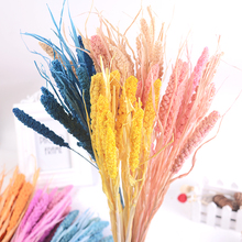 1 lot Natural Dried Flower Millet flower spike Dry Flower Decorative Christmas Home Wedding Table Decor DIY Cereals Fake Plants