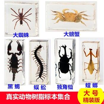 Resin insect specimen handicraft centipede spider beetle