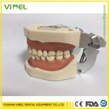 Alta qualidade com removível 28/32 pçs dentes dentários modelo modelo credenciado modelo de ensino dental modelo de demonstração de dente