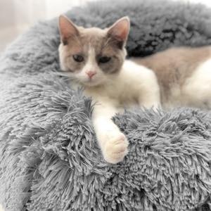 Image 3 - Panier دردشة مستديرة قابل للغسل سرير كلب لينة بيت قطة الحيوانات الأليفة سرير للكلاب منزل القط Haustiere الدردشة Panier طويل أفخم سرير كلب كلب كلب