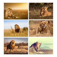 Diamond Embroidery Sale Pictures With Rhinestones 5D Diy Painting Full Drill Square Lion Animal