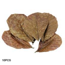 10 шт. класс Натуральный терминалия катаппа Foetida листья остров миндаля листьев кристалл креветки улучшить качество воды