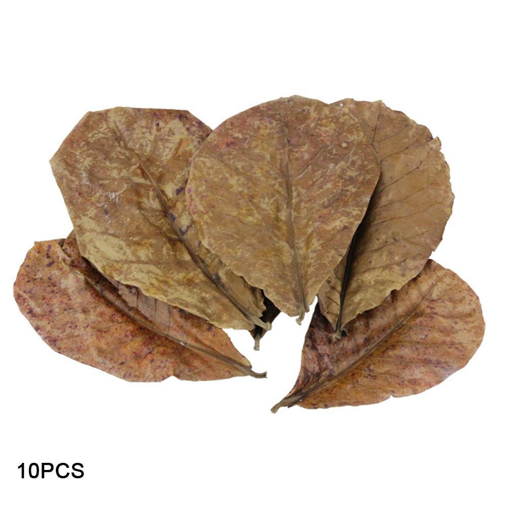 10PCS Grade A Natural Terminalia Catappa Foetida Leaves Island Almond Leaf Fish Cleaning/Treatment Aquarium Tank