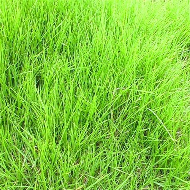Plant Flowers Bath Salts Zoysia japonica Grass Essence 100Pcs XZZ-180 5
