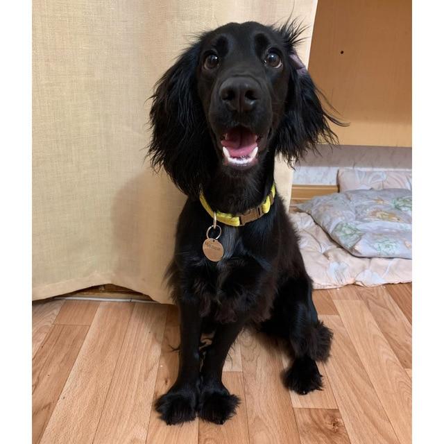 ID tag Free engraving Dog/Cat Collar Nametag  4