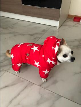Stars Printed and Waterproof Dog Jacket for Chihuahua/Yorkshire Dogs Ideal for Winter 3