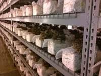 50Pcs 320x650x0.06mm PVC Mushroom Grow Bag Substrate High temp Pre Sealable|Grow Bags| |  -